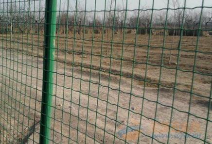 安平县荷兰网电焊网