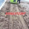 大蒜种植机 自走式蒜瓣播种机厂家 规格齐全