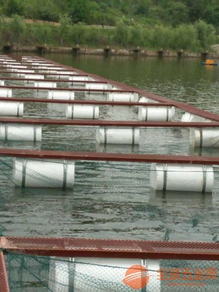 云岩区网箱养殖鲈鱼