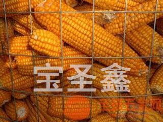 圈玉米网 苞米专用网 镀锌玉米圈 镀锌电焊网