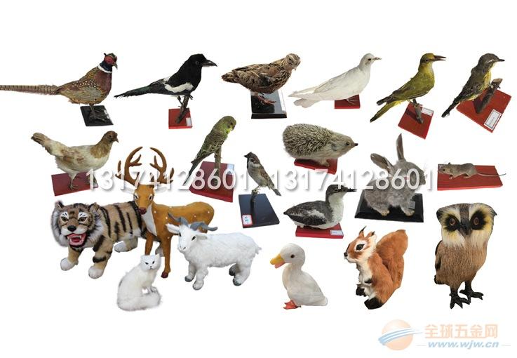 幼儿园科学标本动物标本防真动物厂家直销