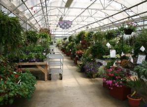 温室大棚育苗棚