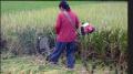 多功能小型收割机小麦收割机牧草收割机型号