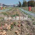 沈阳地瓜收获机 紫薯挖掘机 土豆收获机价格