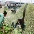豆秸铡草机 水稻秸秆铡草机生产厂家