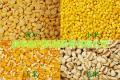 专业去壳机 玉米小麦碾米机 多功能碾米机