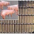 养猪轧花网│养猪轧花网价格行情│养猪轧花网厂