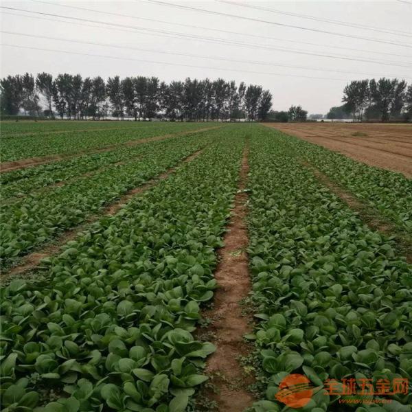 桥西区白菜萝卜育苗机 茼蒿油麦菜播种机