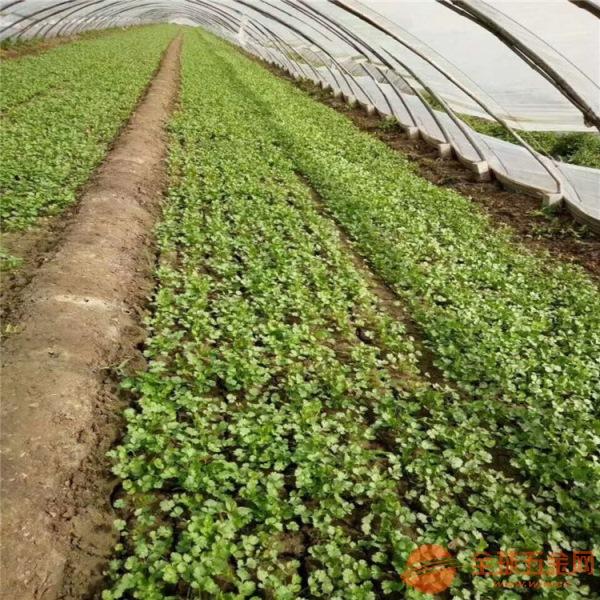 天门手推十行菜心播种机 省人力蔬菜播种机