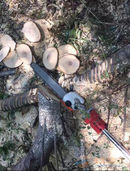 供应锂想高枝链锯园林工具树枝修剪工具