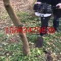 舒兰市 挖树起球机 苗圃专用树苗起树机