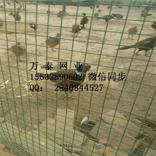 散养鸡专用铁丝网