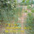 果园防护铁丝网