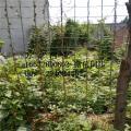养殖网围栏价格