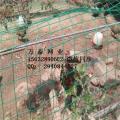 养野兔专用绿色电焊网荷兰网