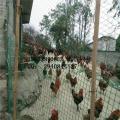养殖围栏网生产厂家