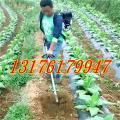 春季用玉米地背负式除草机 背负式旋耕松土机
