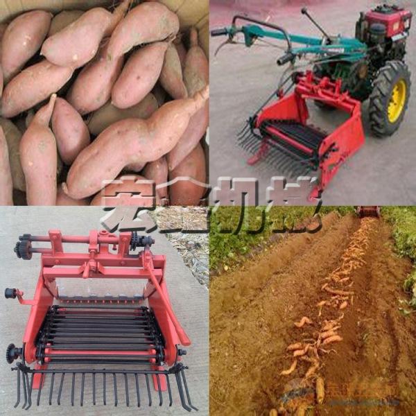 土豆 收获机