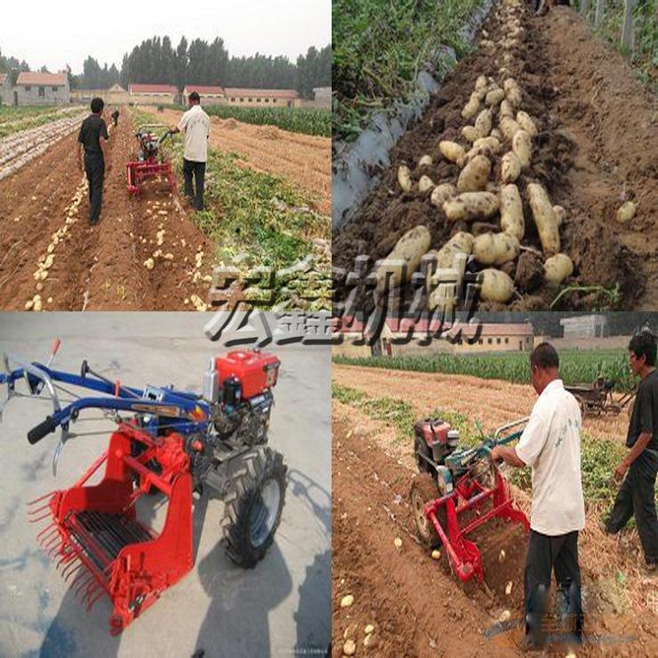 马铃薯收获机价格 马铃薯收获机厂家 薯类收获机