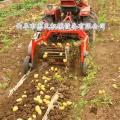 新型土豆薯类收获机 不破皮收获机 收获机价格