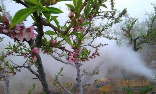 农用汽油打药机 园林树木大功率烟雾机 手提式农药喷药机