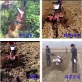 果园专用柴油管理机旋耕机 微耕机价格 小型自走式微耕机