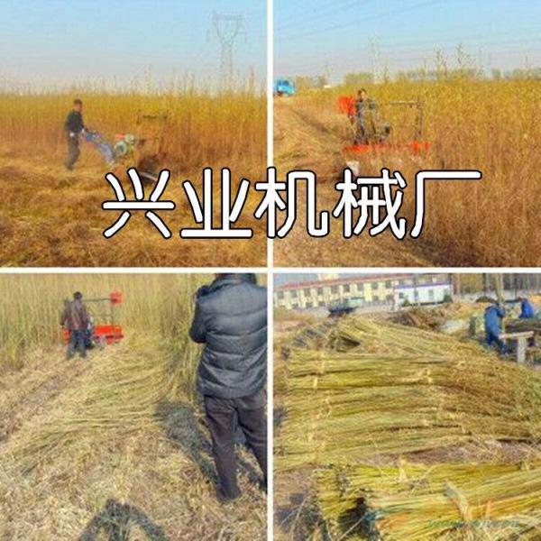 韶关水稻专业收割机