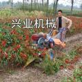 天门自走式苜蓿草收割机
