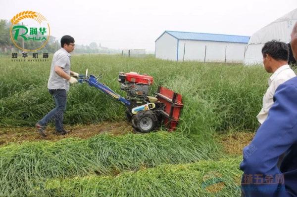 汤旺河区苜蓿草耐用收割机 芦苇稻麦收割机报价