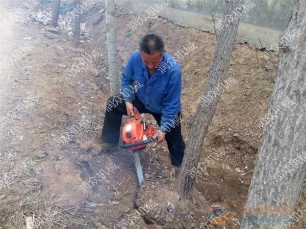 随州果树育苗挖树机园林绿化挖树机