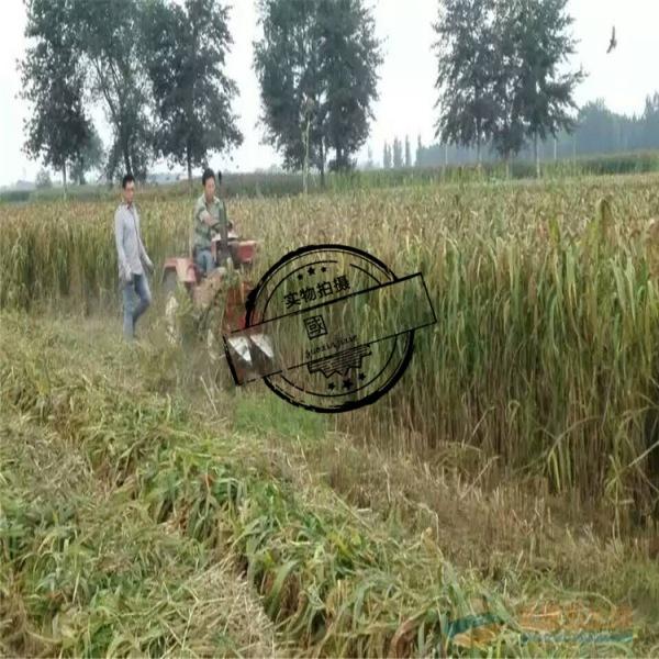新型玉米秸秆割晒机辣椒收割机 淮阳县