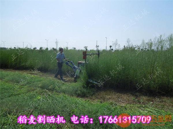 樟树茴香割晒机质保两年