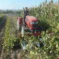 达州 油菜牧草收割机 水稻收割机