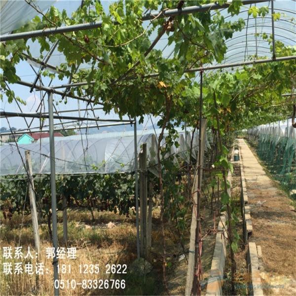 新闻:江北大棚管江北蔬菜大棚管各种蔬菜温室大棚优质商家