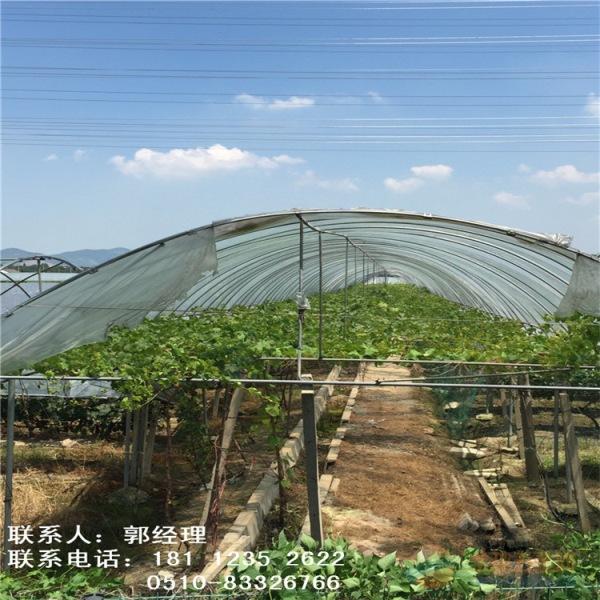 资讯:青海玉树大棚管3米—15米定尺大棚钢管厂