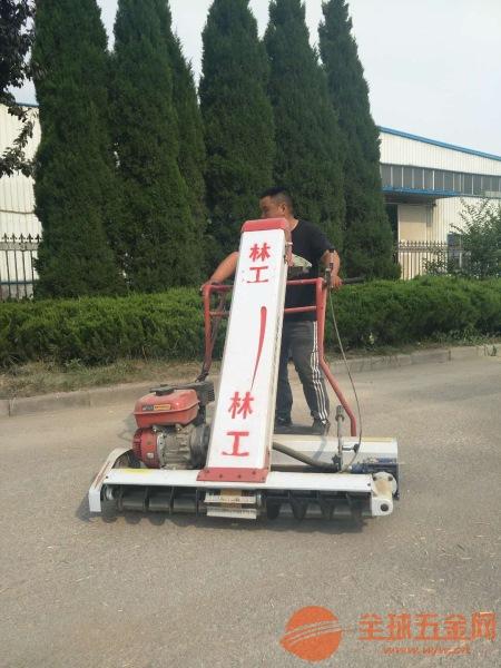 鲁甸县小型颗粒粮食装袋机小麦收集装袋机