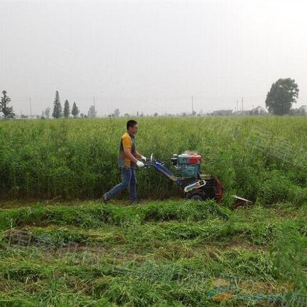 玉米秸秆割晒机图片 大型苜蓿农场收割机 百色